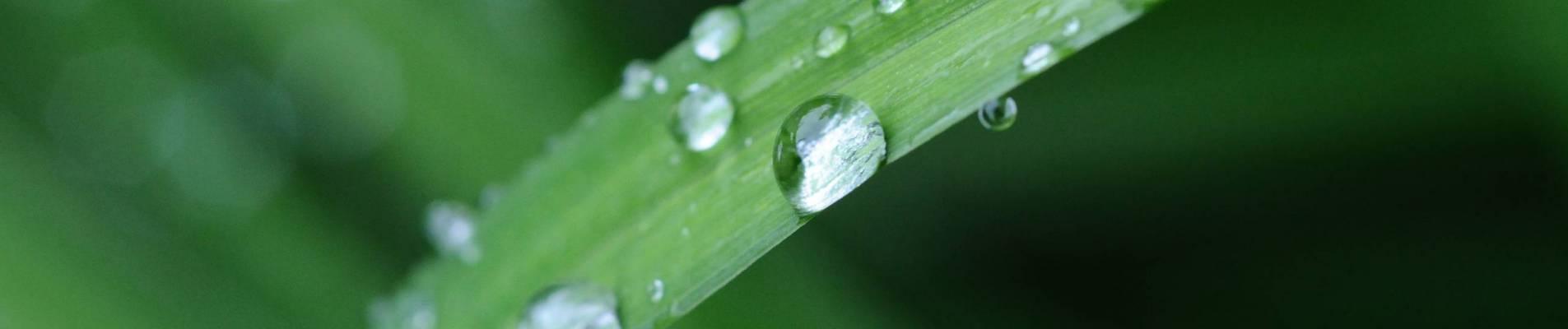 Récupération d'eaux pluviales