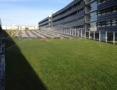 photo toiture végétalisée champs sur marne