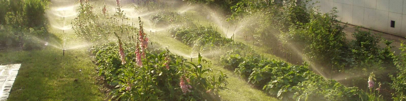 Ilots de chaleur : lutter avec des végétaux… et de l'eau !